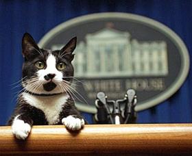 En los Estados Unidos es habitual que una mascota gobierne a su amo.